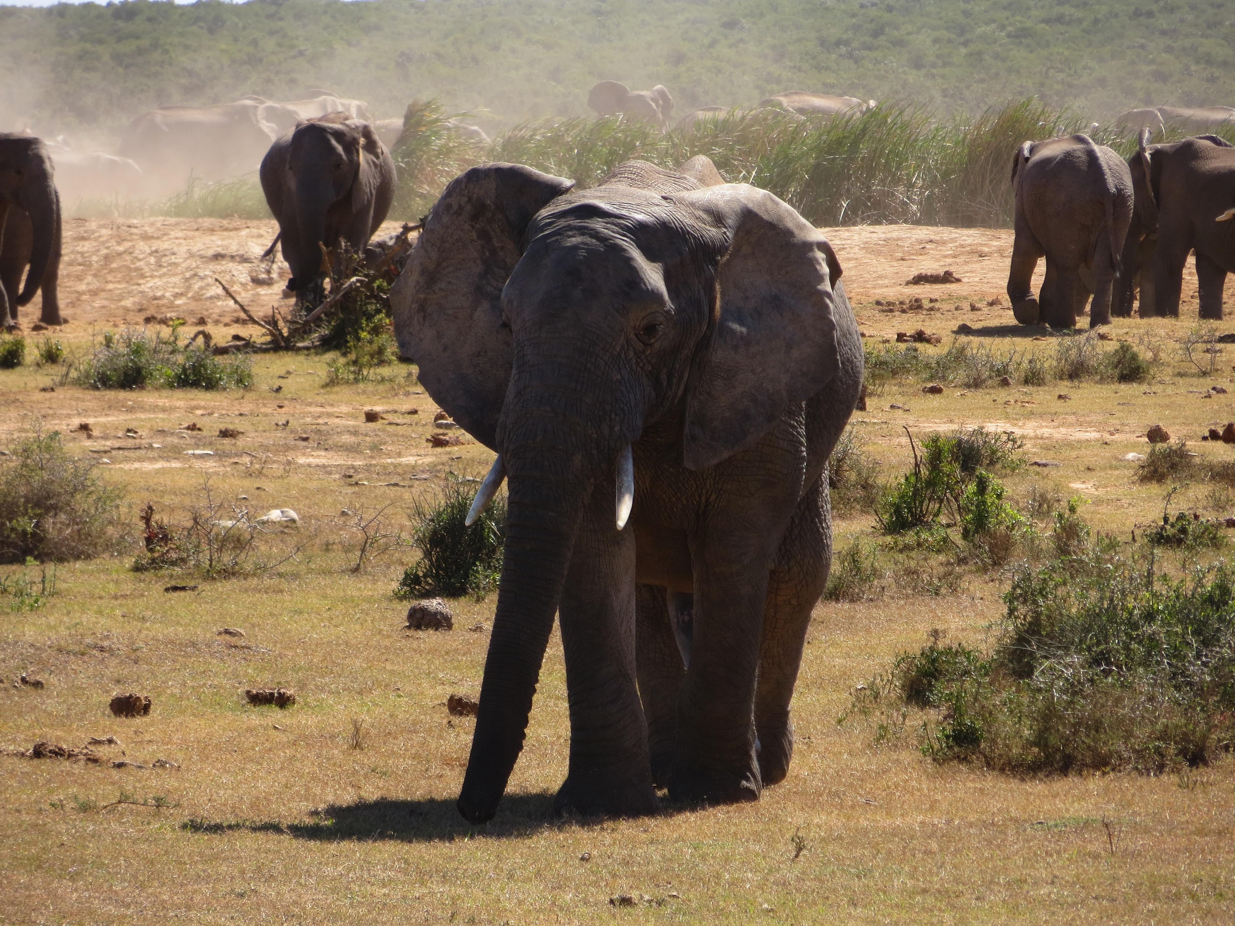África do sul e Botswana, a legítima experiência africana