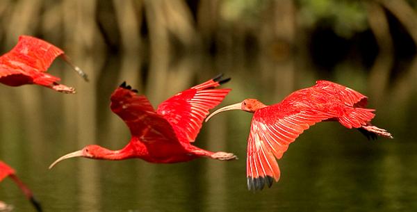 Delta do Parnaíba: santuário ecológico