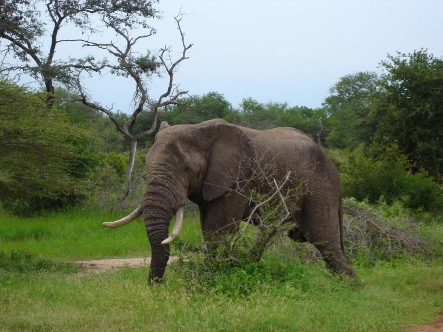 Kruger Park - África do sul surpreendente