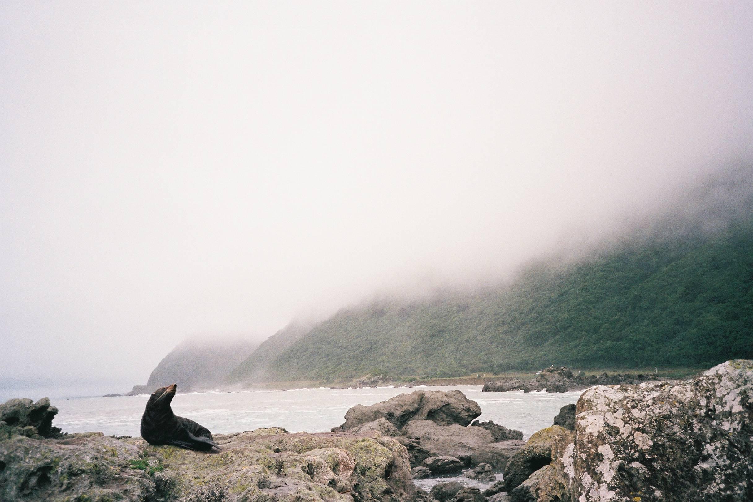 Kaikoura - Nova Zelândia de norte ao sul
