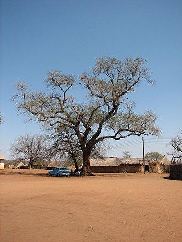 Livingstone - Lua de mel na África