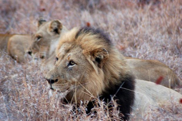 Safári fotográfico, África - Lua de mel na África
