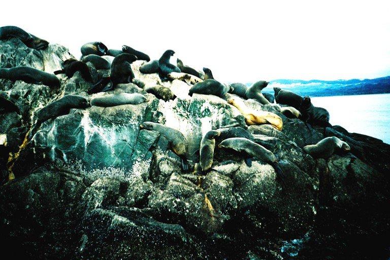 Patagônia e a Terra do Fogo - Canal de Beagle