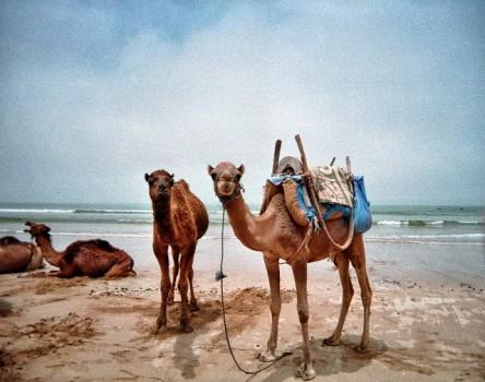 Saara e Marrakech - Essaouira