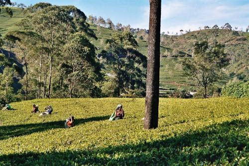 Sri Lanka espetacular - Nuwara Eliya