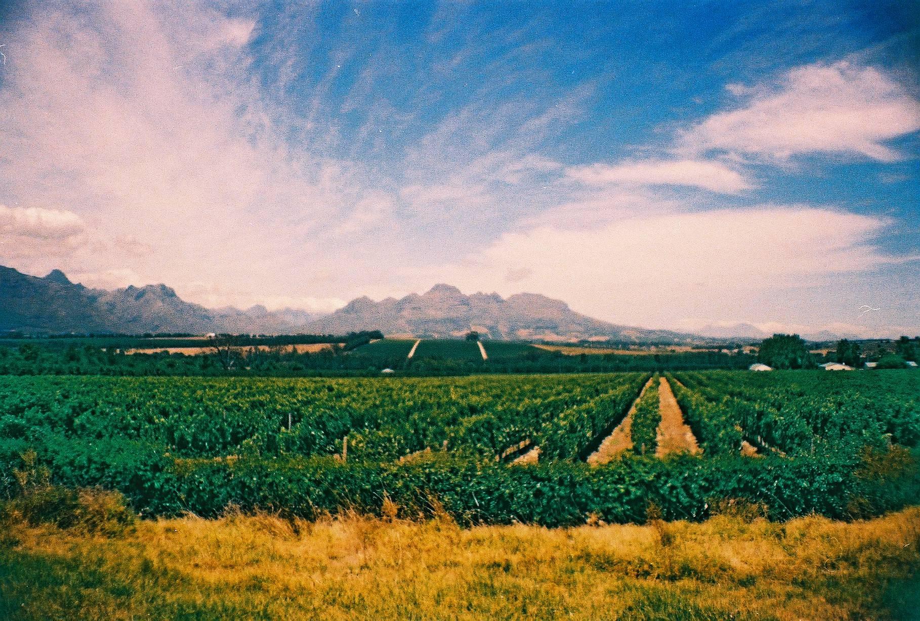 África exclusiva - Stellenbosch