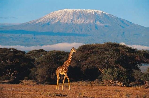 Top parques para visitar no Quênia.