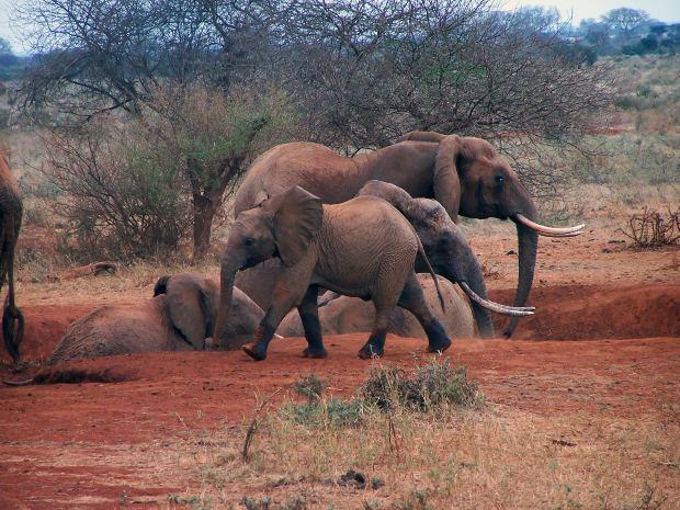 Safári fotográfico, África - África do sul em família
