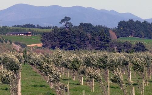 Wairarapa - Rota do vinho na Nova Zelândia