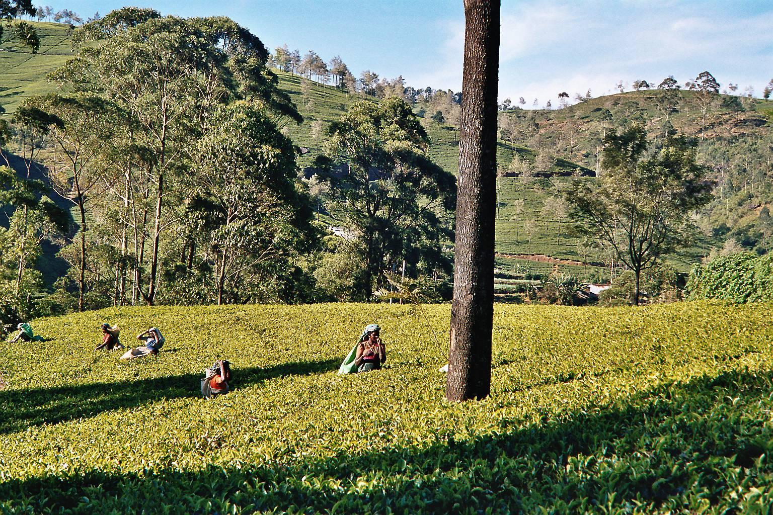 Sri Lanka essencial - Nuwara Eliya