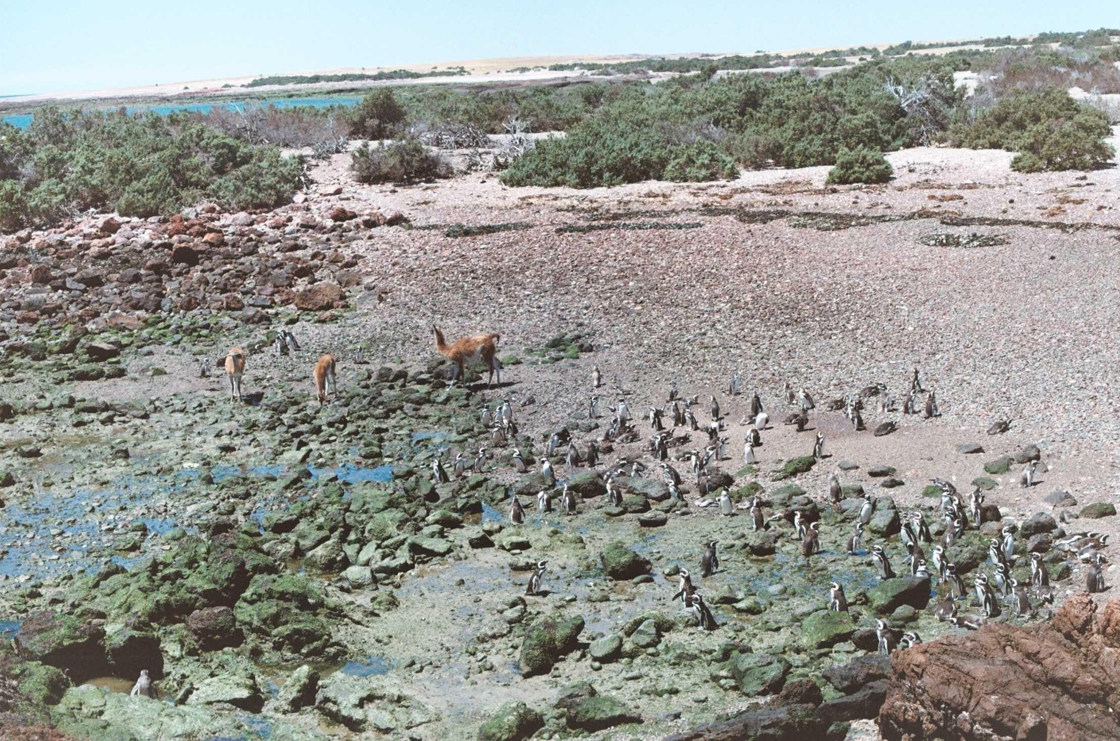 Patagônia e a Terra do Fogo - Puerto Madryn