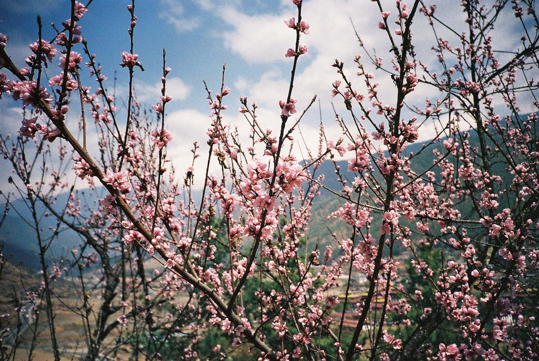 A beleza intocada do Butão - Thimphu