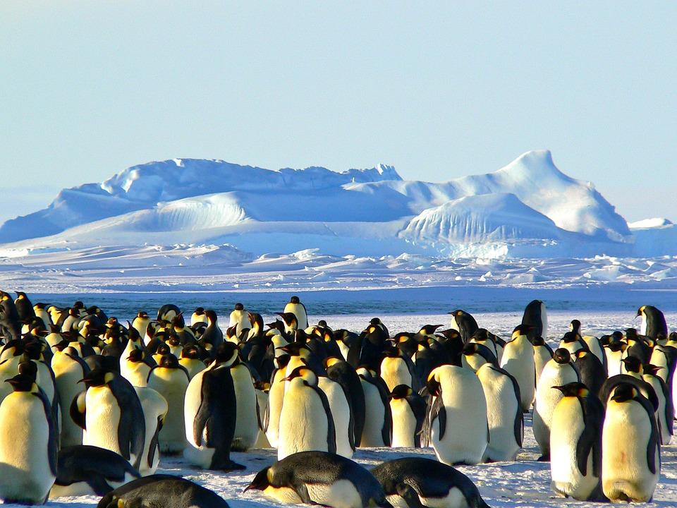 Que tal ser voluntário para estudar pinguins na Antártida?